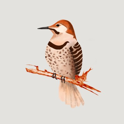 Common flicker
