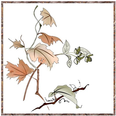 Leaves and seed pods in outline style